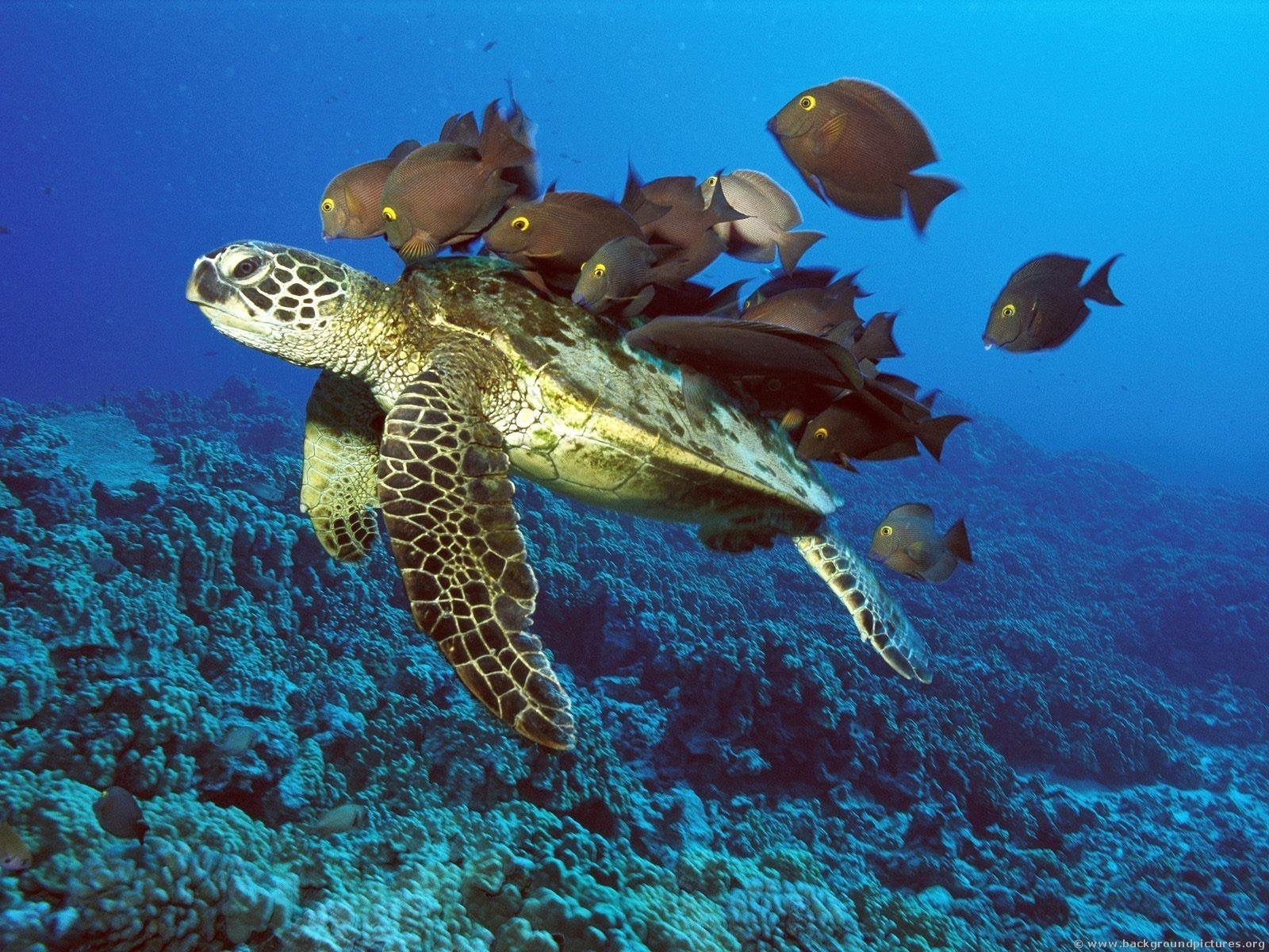 God's creation - turtle with fishes on its back.